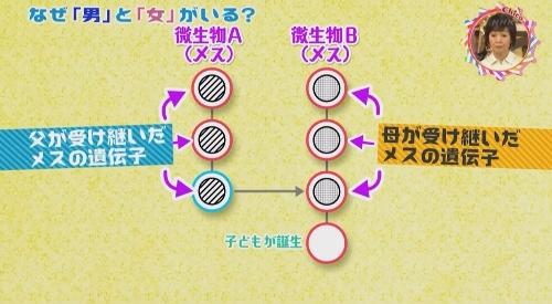 NHK 第2弾 「チコちゃんに叱られる!」男と女がいる理由
