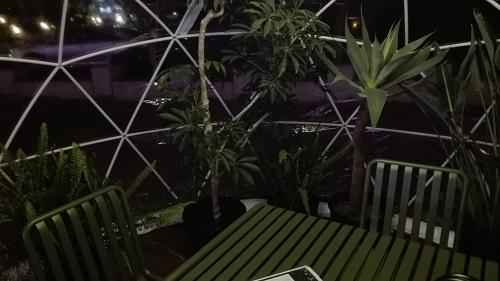 目黒川みんなのイルミネーション2017 五反田ふれあい水辺広場 ガーデンイグルー 観葉植物の席