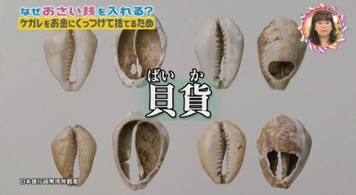 NHK 第3弾「チコちゃんに叱られる!」2017年12月27日 お金のルーツは貝 貝貨