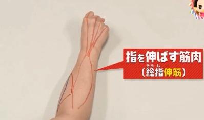 第22回 NHK「チコちゃんに叱られる!」小指ピーンの謎。指を伸ばす伸筋
