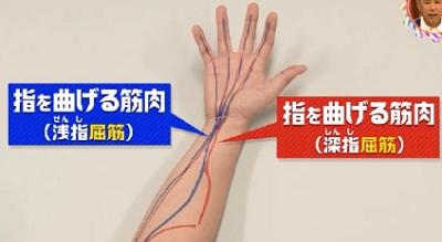 第22回 NHK「チコちゃんに叱られる!」小指ピーンの謎。指を曲げる屈筋