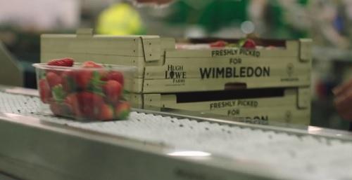 なぜウィンブルドンではストロベリーアンドクリームが名物なのか?当日の朝摘みたてのイチゴ