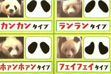 パンダの目の模様。カンカン、ランラン、ホァンホァン、フェイフェイ