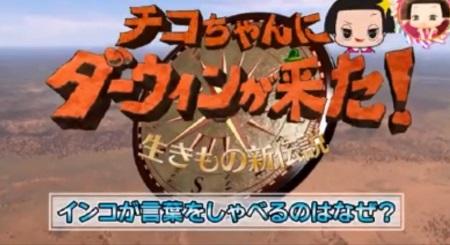 """第33回 お正月拡大SP NHK「チコちゃんに叱られる!大河ドラマ""""いだてん""""とコラボ」ダーウィンが来た!コラボも実現!"""