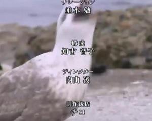 第74回 NHK「チコちゃんに叱られる!年末拡大SP」衝撃映像2連発のスタッフロール 知古智子