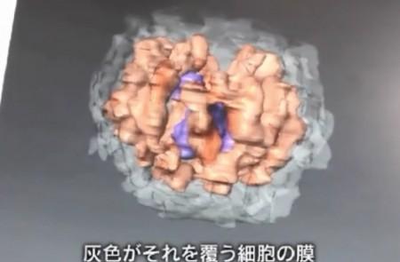 ウイルス学の世界的権威・河岡義裕が語る新型コロナウイルスとは?情熱大陸より。新型コロナウイルスの3D画像データ