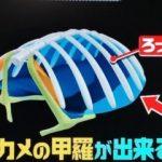 """亀の甲羅の正体は""""肋骨""""ってどういうこと?第95回 NHK「チコちゃんに叱られる!」より"""