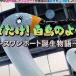 """なぜ日本中の池や湖にスワンボートがある?答えは""""ある工夫""""第98回 NHK「チコちゃんに叱られる!」より"""