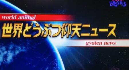 世界どうぶつ仰天ニュース!第99回 NHK「チコちゃんに叱られる!」より