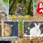 第8弾大先生アワーは宝の持ち腐れ動物ベスト3!NHK「チコちゃんに叱られる!」