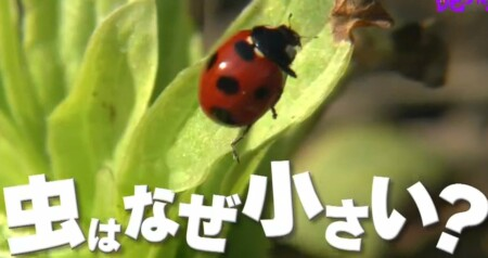 虫はなぜ小さい?2つの理由「チコちゃんに叱られる!」より