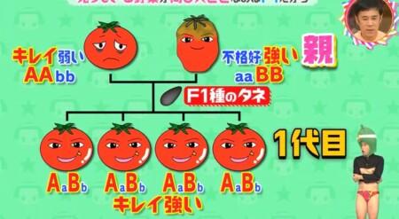 なぜ売っている野菜は同じ大きさ?F1種だから「チコちゃんに叱られる!」