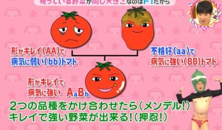 トマトを例にしたメンデルの法則の説明「チコちゃんに叱られる!」