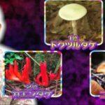 第9弾大先生アワーは絶対に食べちゃいけない毒キノコ ワースト3「チコちゃんに叱られる!」