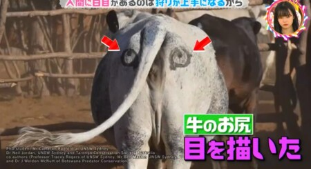 白目はなぜ白い?人間だけにある理由は?牛のお尻に目を描く実験「チコちゃんに叱られる!」