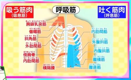 今でしょ講座 秋野暢子の10カウント呼吸法で呼吸筋ストレッチのやり方 主な呼吸筋リスト