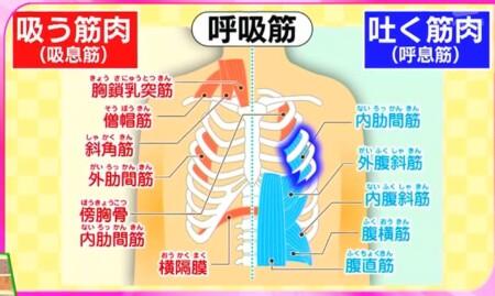 今でしょ講座 秋野暢子の10カウント呼吸法で呼吸筋ストレッチのやり方 体幹の呼吸筋