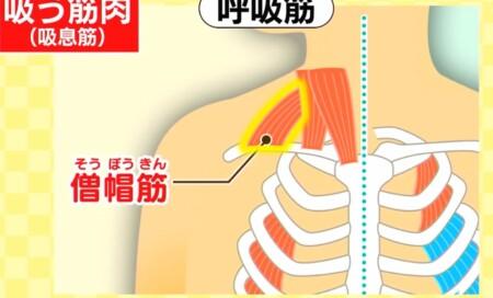 今でしょ講座 秋野暢子の10カウント呼吸法で呼吸筋ストレッチのやり方 背中・肩の呼吸筋