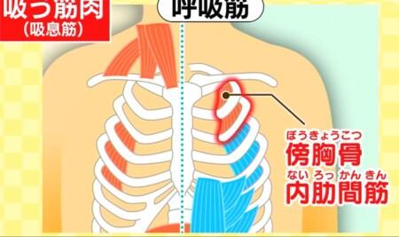 今でしょ講座 秋野暢子の10カウント呼吸法で呼吸筋ストレッチのやり方 胸の呼吸筋