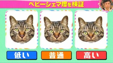 猫がかわいいのはなぜ?ベビーシェマ度検証実験 3種類の猫の画像 チコちゃんに叱られる