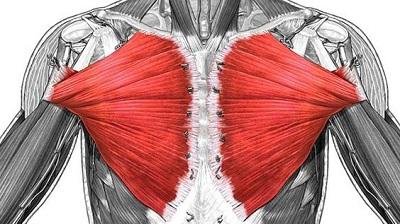 部位別 筋肉量・筋肉の大きさランキングベスト10 全身の筋肉を大きい順に並べると? 第6位 大胸筋