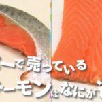 サーモンと鮭の違い?同じ魚でも何が違う?サーモンが寿司屋にない理由?チコちゃんに叱られる