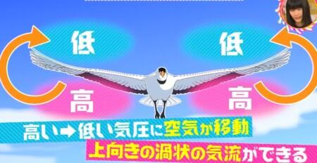 なぜ渡り鳥はV字型編隊飛行をする?理由は休まず飛び続けるフォーメーション?チコちゃんに叱られる 翼の上昇気流