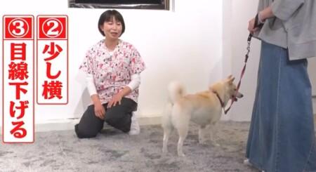 世界一受けたい授業 動物に好かれる人になる5つの方法は?初対面の犬に近付く時の基本ポジション