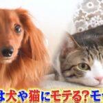 世界一受けたい授業 動物に好かれる人になる5つの方法は?犬や猫にすぐに懐かれる人の特徴