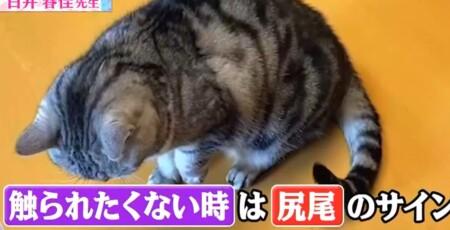 世界一受けたい授業 動物に好かれる人になる5つの方法は?猫が触られたくない時のサインは座って尻尾
