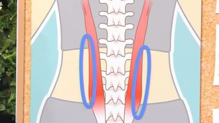 NHKあさイチ 腰のファシアの位置 2段階のファシアケアで腰痛・膝の痛み改善の詳しいやり方、新常識は?