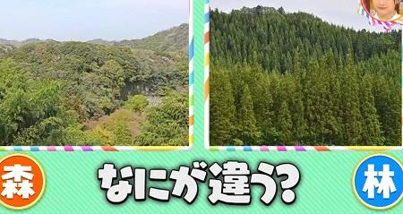 森と林の違いは何?明治神宮は森と林どっち?チコちゃんに叱られる