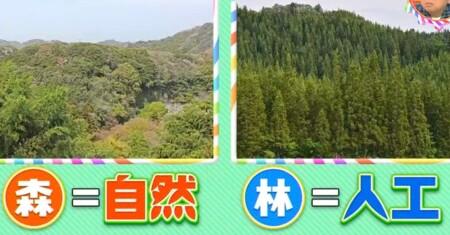 森と林の違いは自然か人工かの違い。明治神宮は森でもあり林でもある?チコちゃんに叱られる