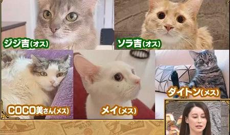 ダレノガレ明美が飼っている猫たち5匹にかかるペット代は月10万オーバー