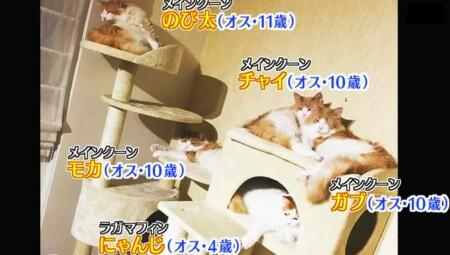 アメトーーク 猫メロメロ芸人の出演者&飼い猫一覧 かまいたち山内 にゃんじ、ガブ、モカ、チャイ、のび太