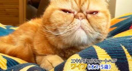 アメトーーク 猫メロメロ芸人の出演者&飼い猫一覧 とろサーモン久保田 ワイフ