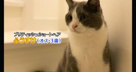 アメトーーク 猫メロメロ芸人の出演者&飼い猫一覧 カミナリたくみ ふうすけ