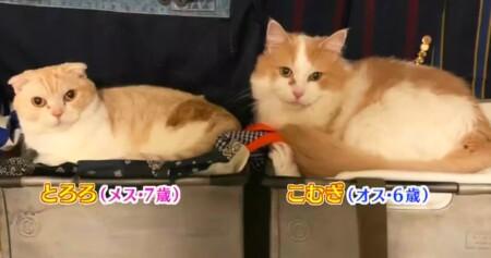アメトーーク 猫メロメロ芸人の出演者&飼い猫一覧 カミナリまなぶ とろろ、こむぎ