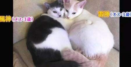 アメトーーク 猫メロメロ芸人の出演者&飼い猫一覧 サンシャイン池崎 風神、雷神