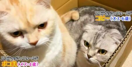 アメトーーク 猫メロメロ芸人の出演者&飼い猫一覧 シソンヌ長谷川 ポコ美、コピー