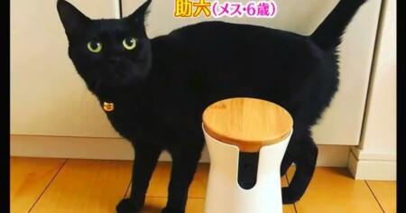 アメトーーク 猫メロメロ芸人の出演者&飼い猫一覧 ミキ亜生 助六