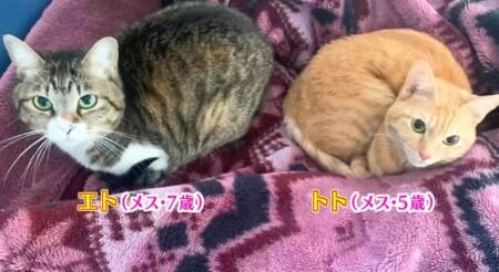 アメトーーク 猫メロメロ芸人の出演者&飼い猫一覧 蛙亭・中野 エト、トト