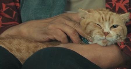 ドクターX 2021 シーズン7 神原名医紹介所の飼い猫ベンケーシー&ギャノン登場シーンまとめ 第1話 撫でられるベンケーシー